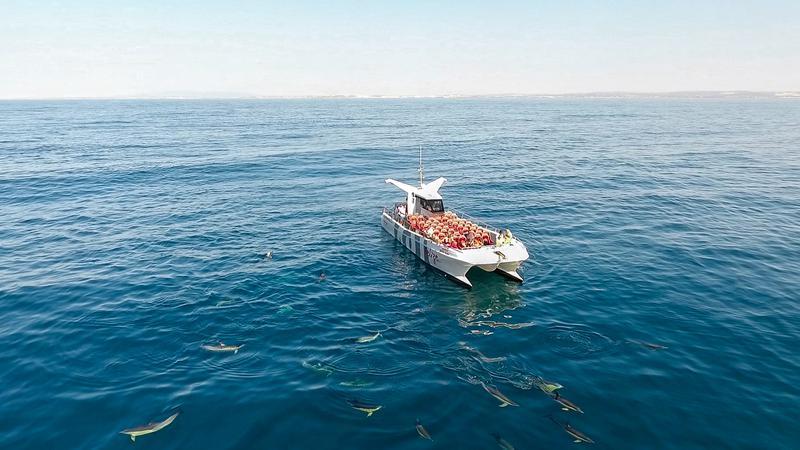 Ruta en barco Delfines y Cuevas en Albufeira. Fiesta en barco en el Algarve. Despedidas de soltero y soltera en el Algarve